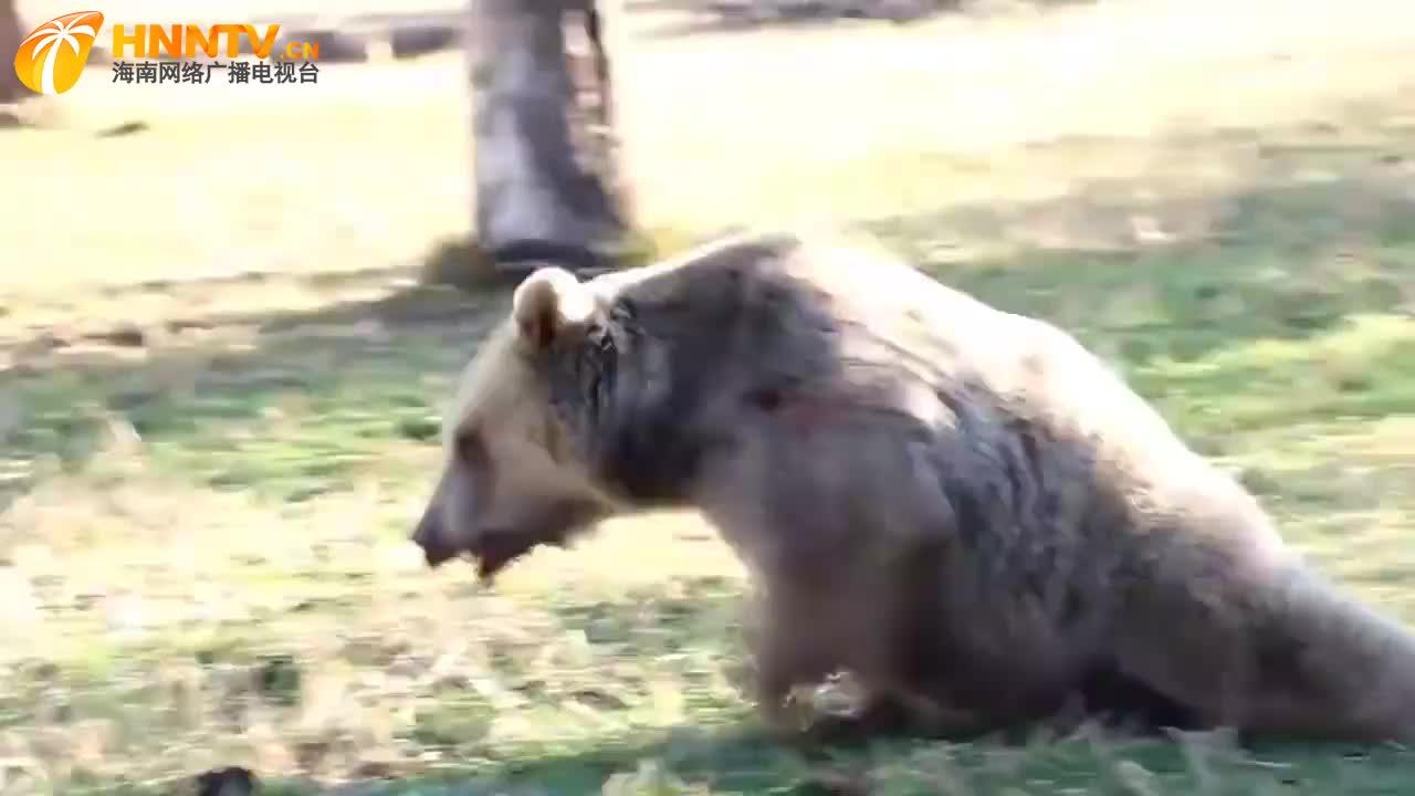 黑熊跑进居民家中偷吃鸟食,被狗狗一脚踹飞!