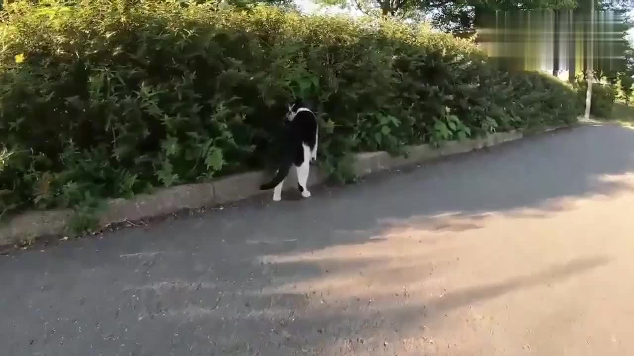 猫咪在大马路上打情骂俏