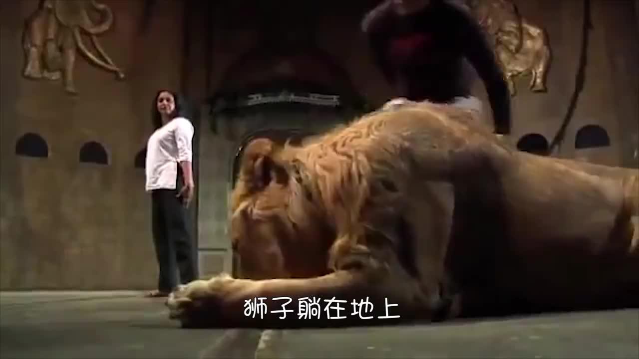 男子与老虎狮子的互动!
