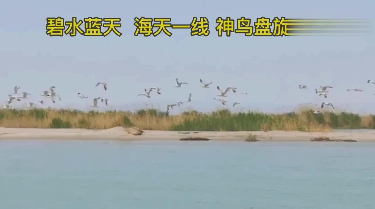新疆戈壁滩中埋藏着一个神秘岛到处是鸟蛋和金丝玉