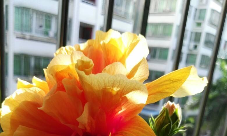 秋天凉风飕飕起,花卉入室要注意,两项工作要做好