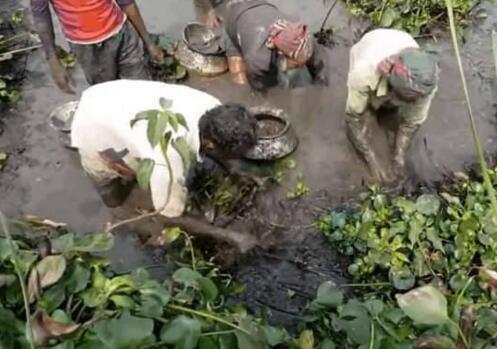 村头的池塘干涸无人问,男子却特立独行,挖开烂泥收货好宝贝!