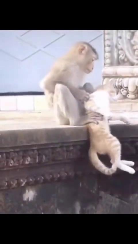 猫反正我跑不了还是享受吧!猴怕什么?给你找虱子