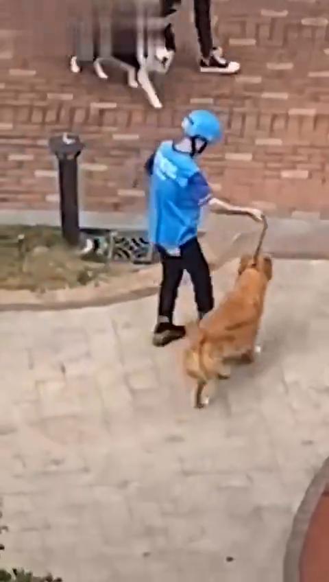 饿了么这个代遛狗服务太可爱了吧