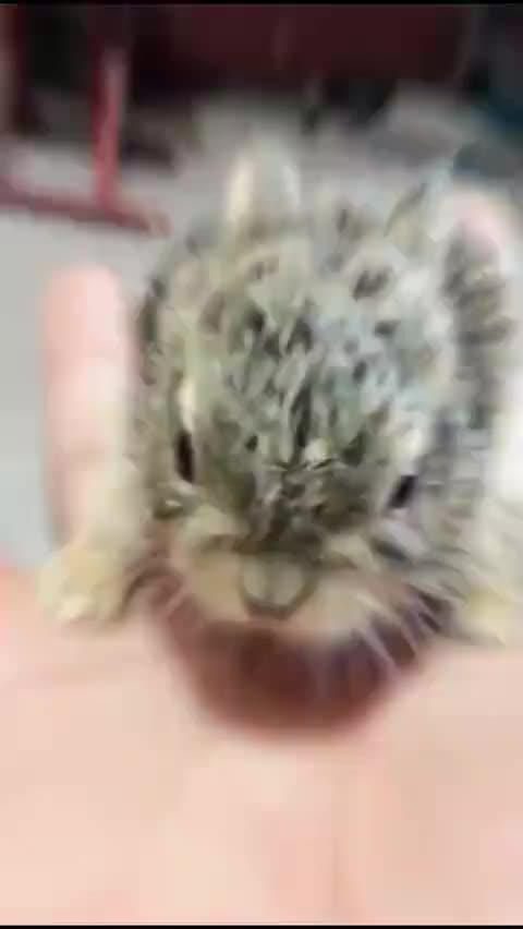 野兔妈妈在农场的鸡窝里生了一堆兔宝宝,然后跑走了