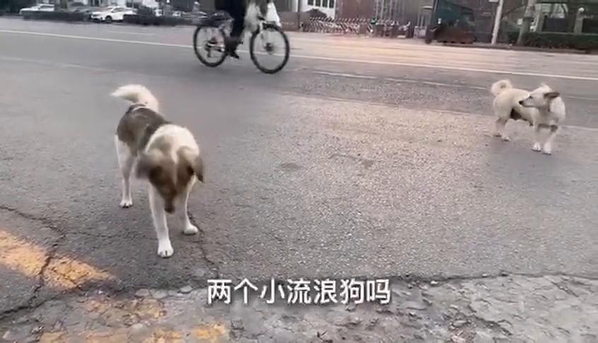 石家庄石门公园门口,偶遇2只流浪狗和一只走丢宠物狗,斗地主呢
