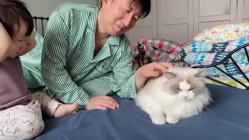 人类幼崽疯狂强吻布偶猫公公,猫:请你冷静