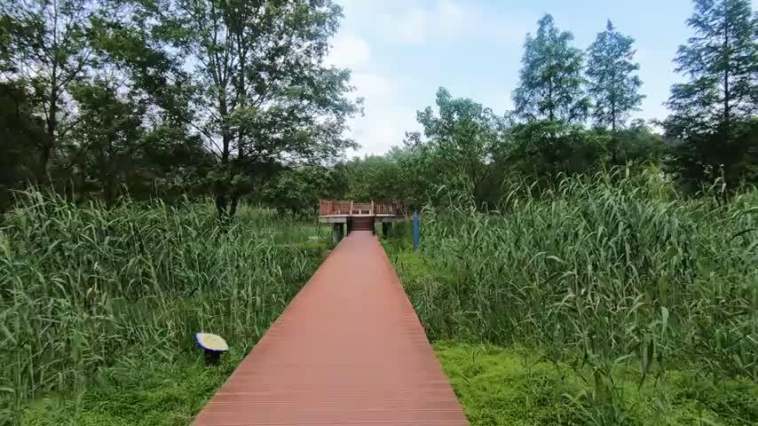 浙江宁波东钱湖马山湿地,环境优美,值得一来