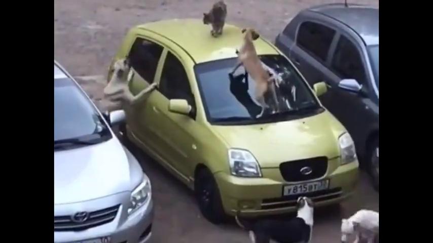 猫咪被狗狗包围,四面楚歌不敢动弹,场景超搞笑!