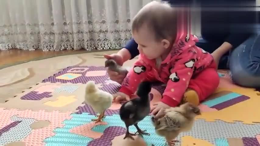 小宝宝第一次遇上一群小鸡崽,小手不停的勾搭要玩耍,超可爱