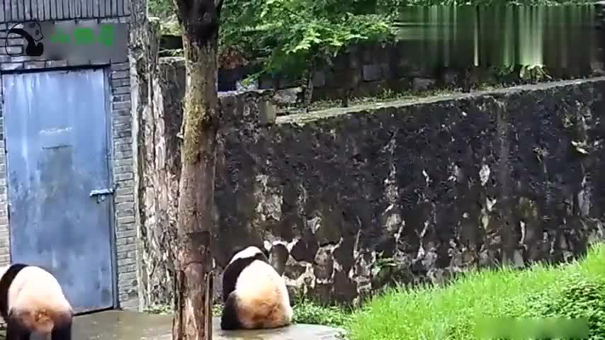 大熊猫:严禁高空抛物!把我砸伤了怎么办!扔胡萝卜那就另当别论