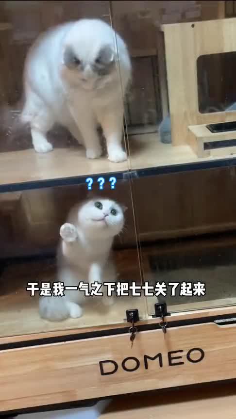 长得帅有什么用,还不是被猫欺负!