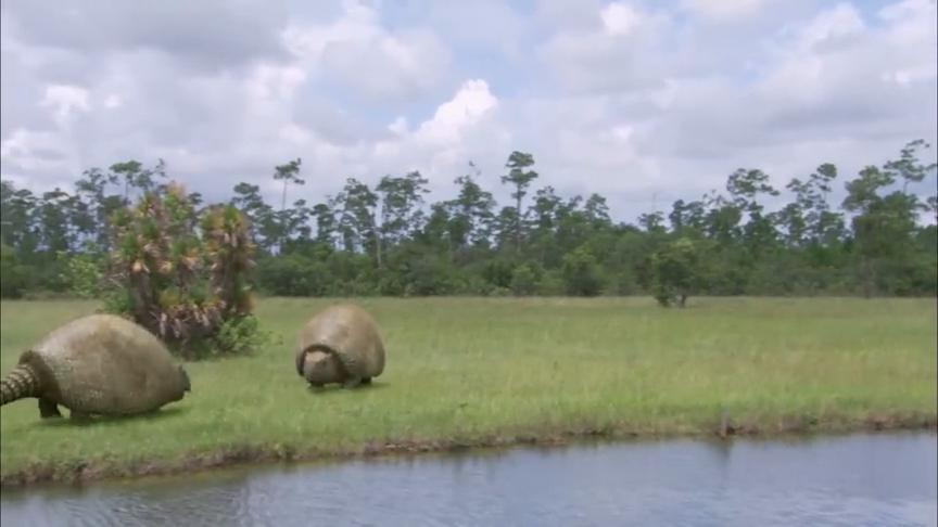 冰河期巨兽:两个大壳乌龟在打架