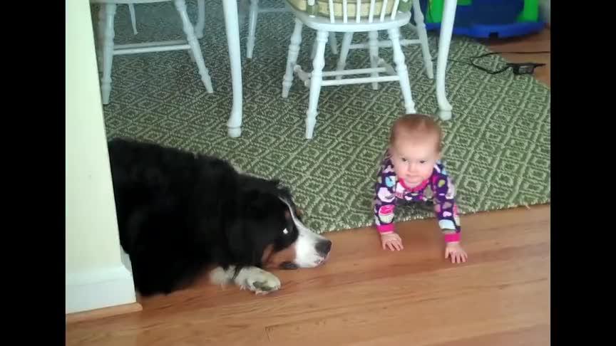 宝宝练习爬行,被玩耍的狗狗给撞翻了,宝宝一脸懵:发生了什么