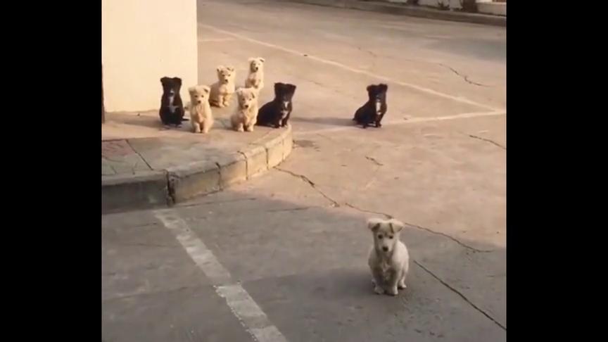 小区内,一群从未在意的流浪狗,刚刚其乐融融的时刻,好幸福啊!