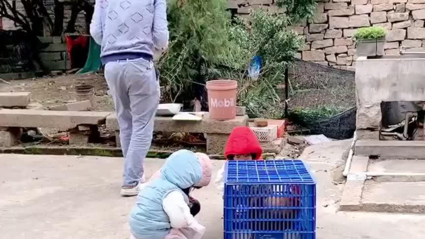 历史以来杀鸡最尴尬的一次,水煮沸了鸡却跑了,三胞胎哈哈大笑