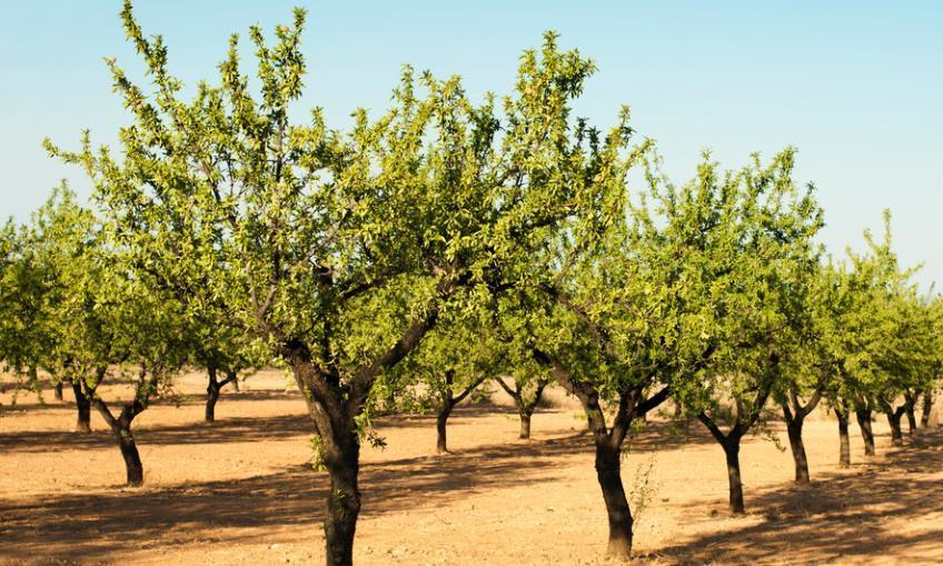 果树种植存活率较高技术活,采用滴注式树干注药防治果树病虫害