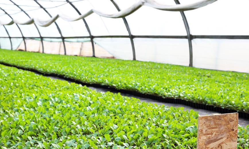 温室无公害绿色蔬菜种植技术,提高蔬菜种植效率和收益,值得一看