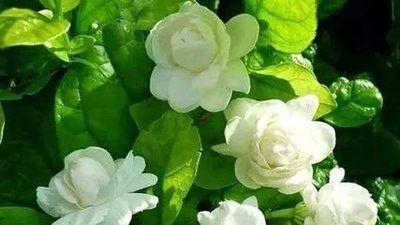 几种花寓意好,沾土就能活,四季常青开花美,养家里,吉祥福满堂