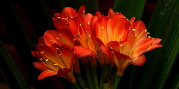 夏季天热,给花浇水要慎重,这几种花千万不要多浇!