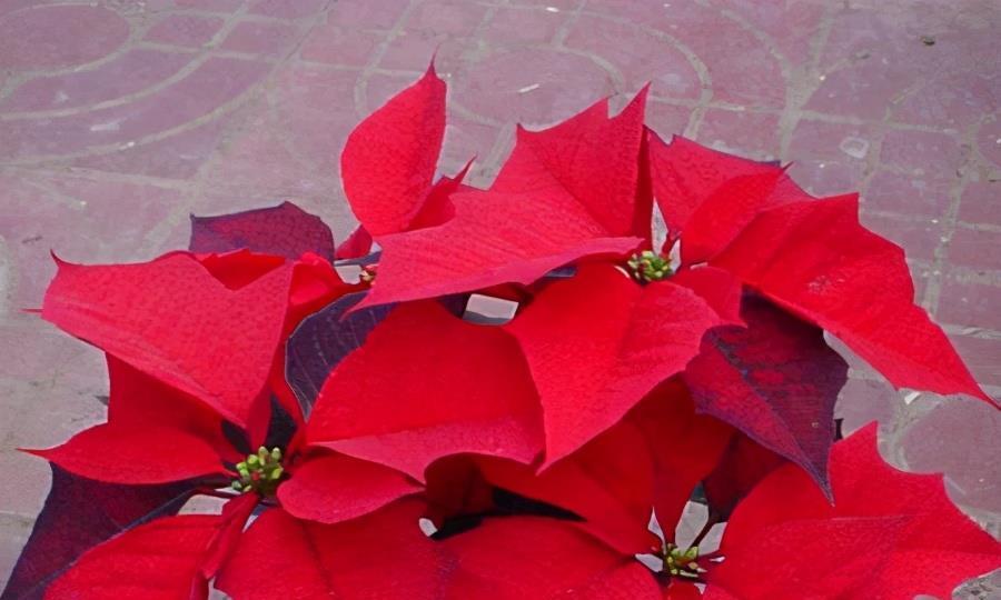 这3种花不能放在室内,植株有毒,不得不防