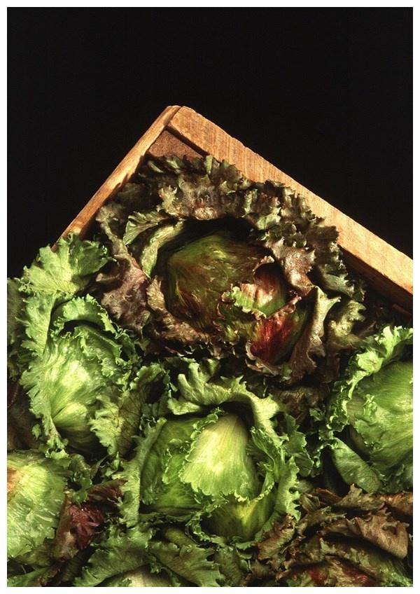 夏天不妨常吃此蔬菜,补充营养,降脂减肥,还能镇静安神