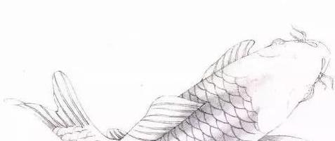 国画技法  工笔鲤鱼、鳜鱼、小鱼、热带鱼的画法示范步骤讲解