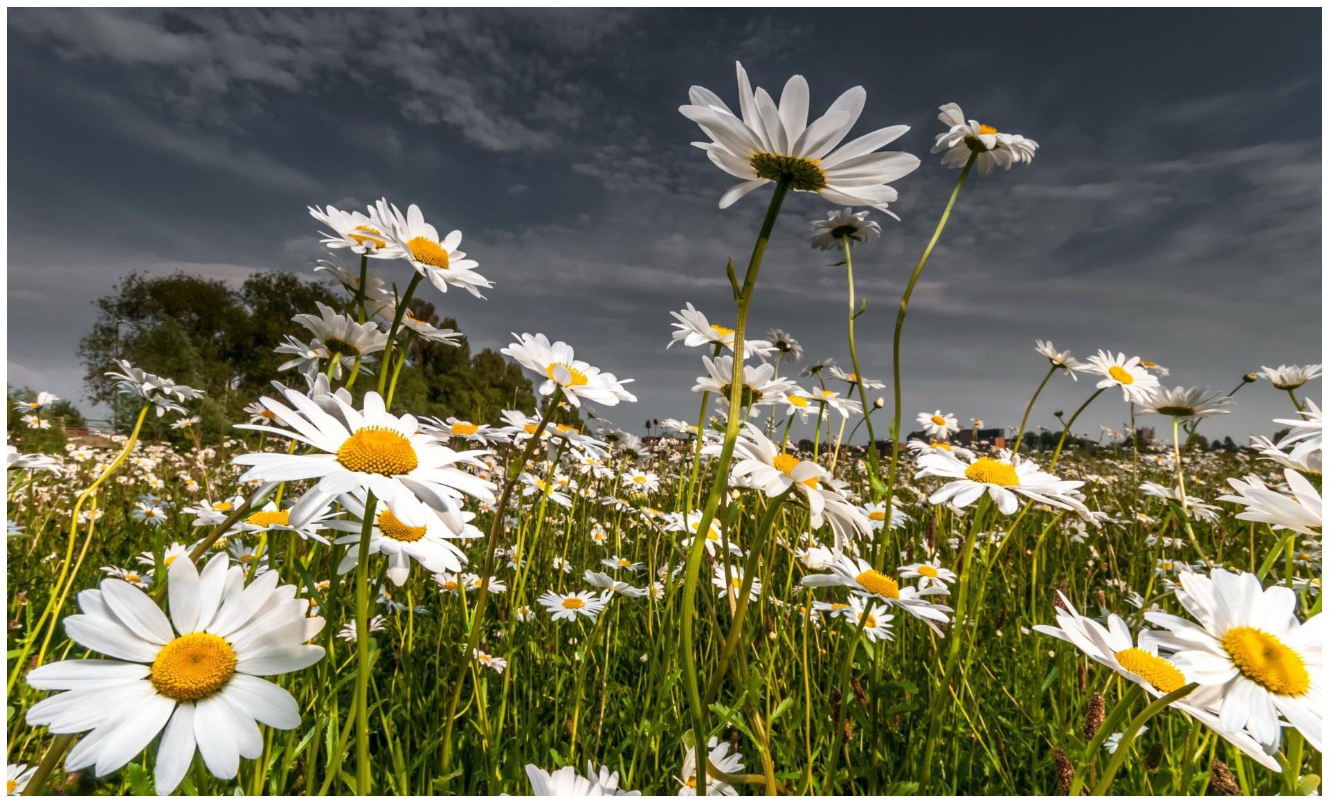 在近期,花开半夏,独宠旧爱,幸福重归,收获完美爱情的四大星座