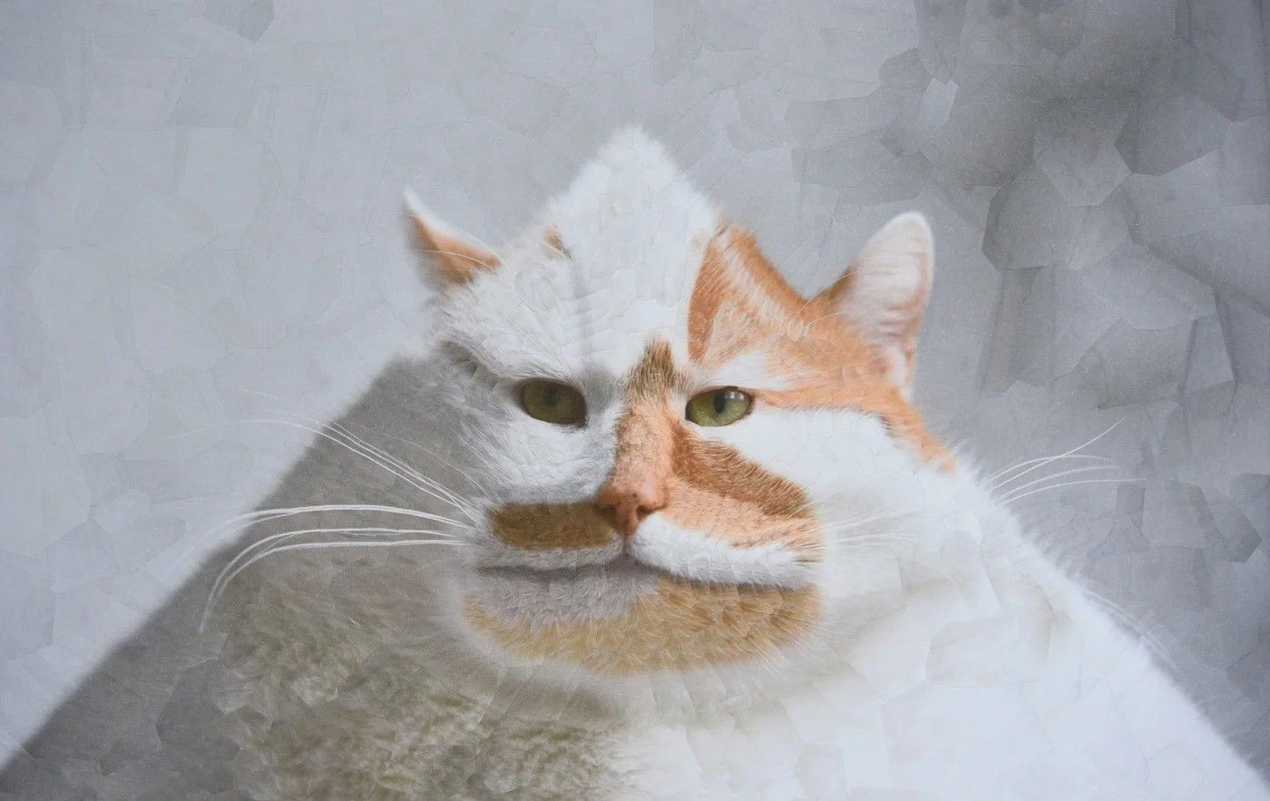 英国艺术家创作的扭曲拼贴画猫的肖像