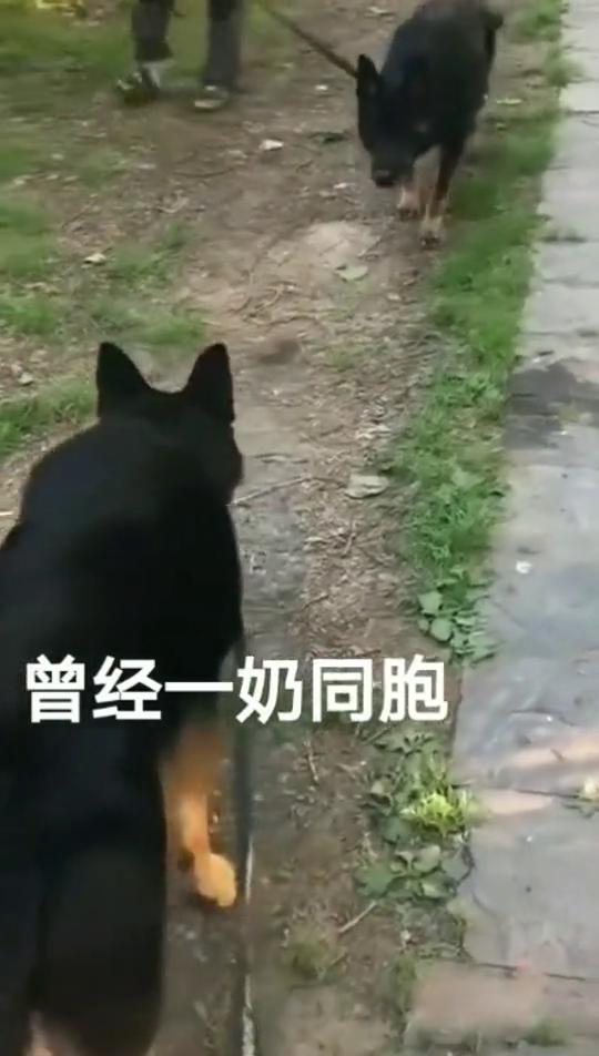 小时候送人的狗狗,当再次相见的时候,结局真的没想到!