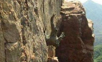 发财啦:小伙在悬崖上发现了宝贝,结果竟然一夜暴富!
