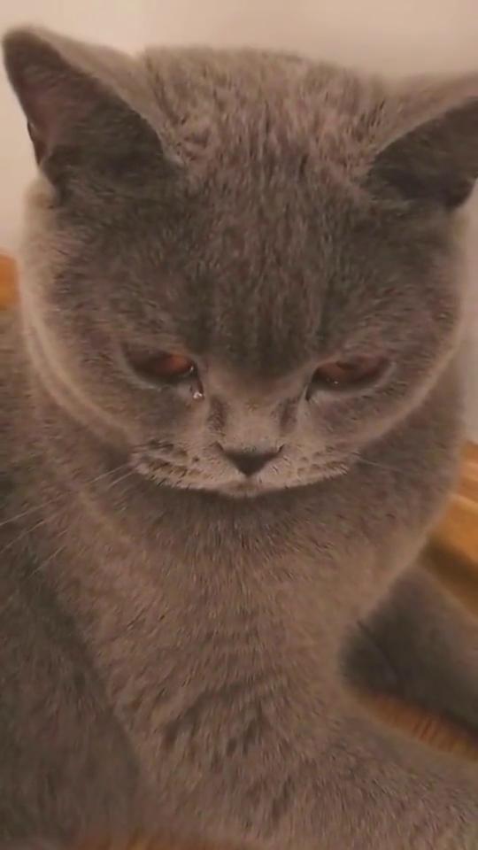 猫咪遇见伤心事了,眼泪都流出来了