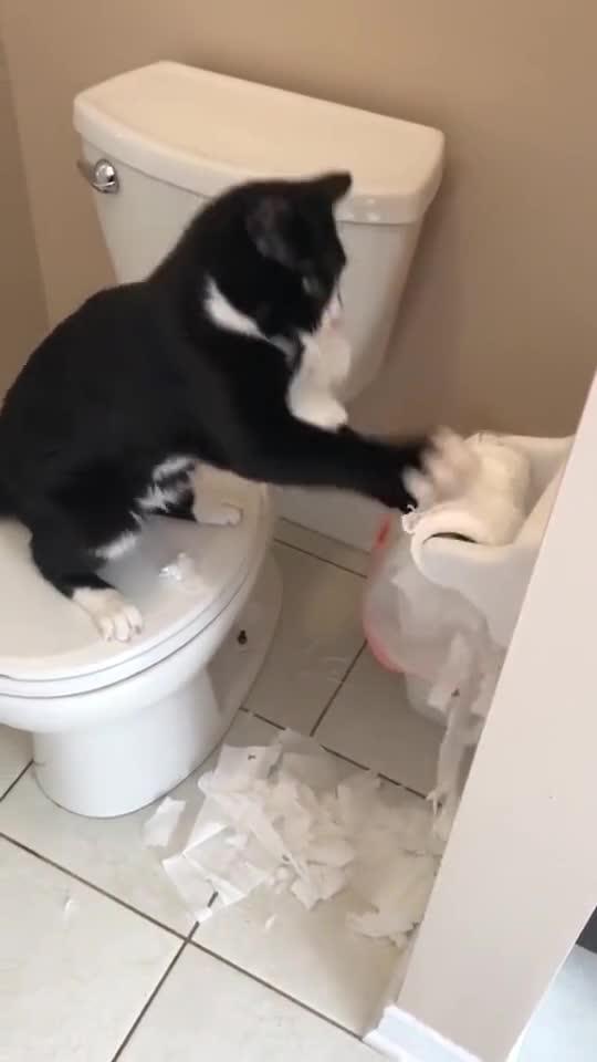 都说狗会拆家,看这样子,猫也不赖啊!