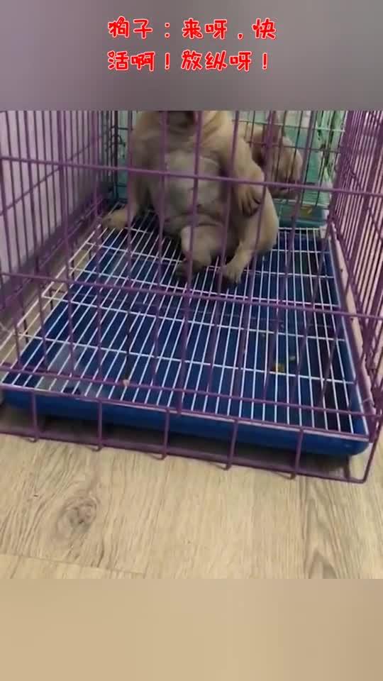 狗子:来呀,快活呀!