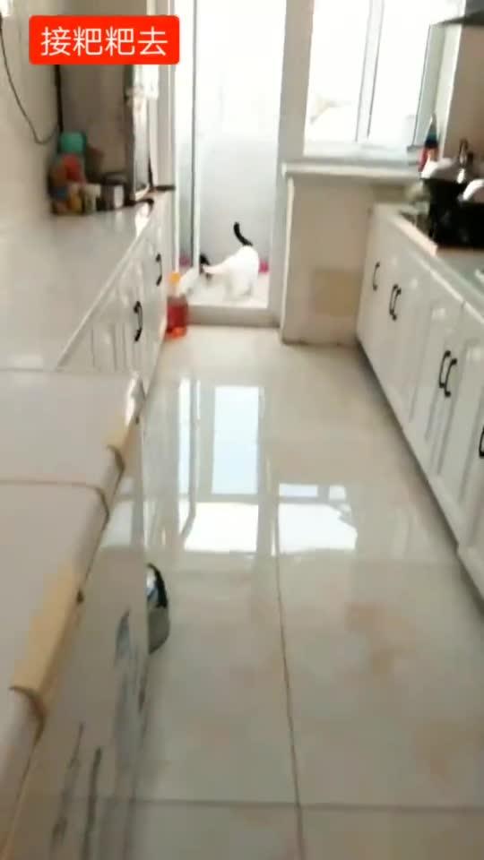 主人一回家,猫咪立刻就来迎接,网友:不知道还以为是小情人!