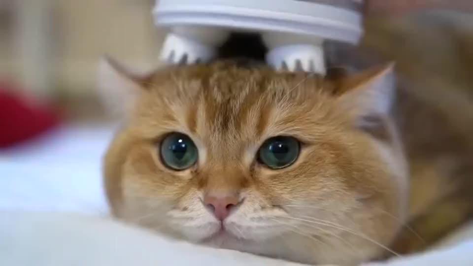 橘猫:吸猫时间到!有助于提神醒脑