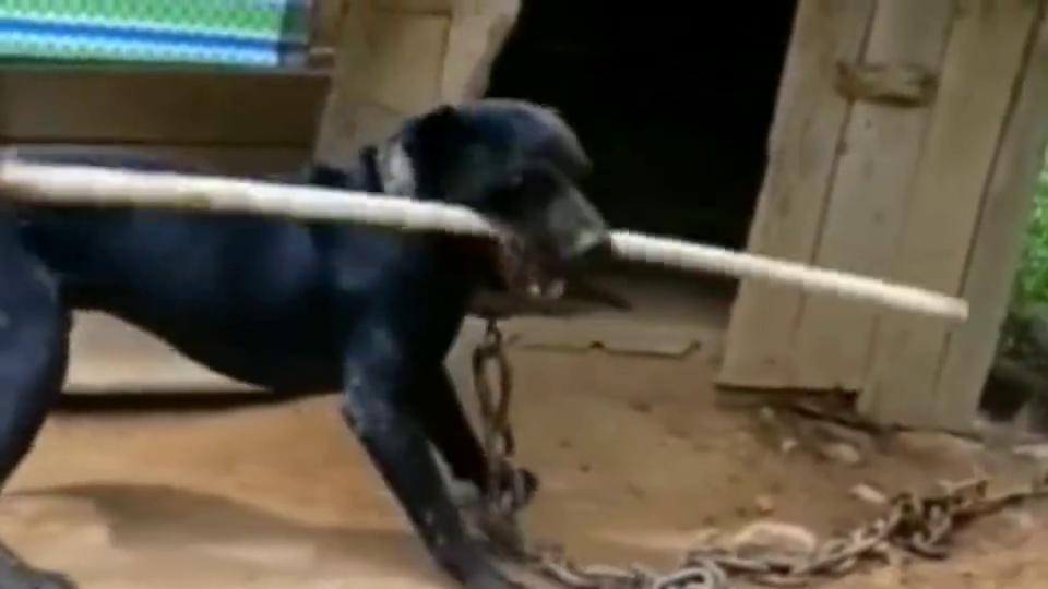 狗子:功夫熊猫见过,功夫犬见过吗?