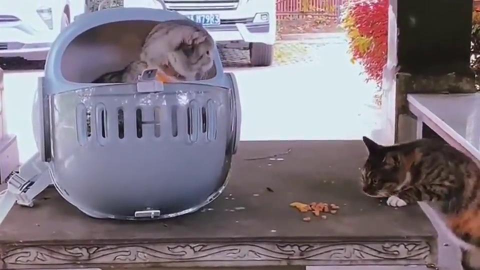 当流浪猫遇到宠物猫的那一刻,不敢靠近的样子看的心酸