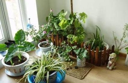 夏季室内养这3种盆栽,驱蚊除蝇,净化空气,让主人安睡到天亮