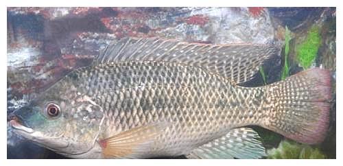 被误解最深的鱼!一斤3元没人买,其实它比鲫鱼营养,比龙利鱼香