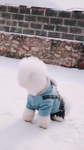 在雪地里的小狗,呆呆萌萌的样子,网友:想带回家养着