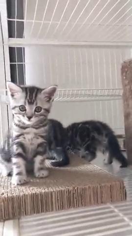 你瞅啥呢,干什么一只盯着我看,小猫迷茫的小眼睛太萌了