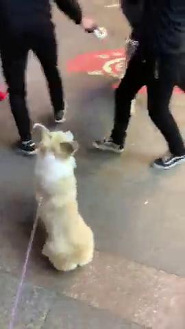 世界上最怂的狗就是它,连比自己体格小的都干不过,真是丢脸