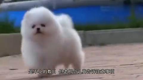 韩国狗狗幼儿园,网络上一夜走红!狗狗集体睡午觉萌翻众人!