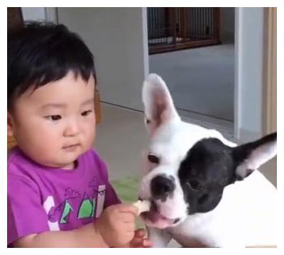 """妈妈去拿快递,""""吩咐""""狗狗照顾儿子,接下来场景太逗,妈妈笑喷"""