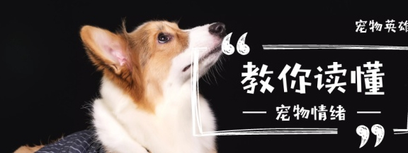 4种狗狗的先天性疾病,铲屎官一定要搞清楚,这些病伴随狗狗一生