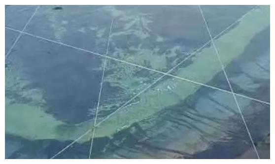 高温季节不得不防的藻类,你可知道?