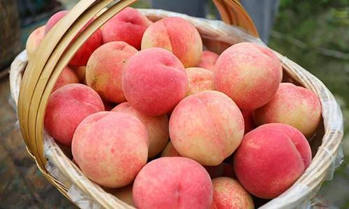夏天吃桃子要留意,我也是今天听果农说了才知道,看完转告朋友
