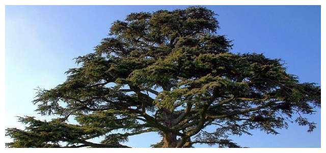 你会在哪棵树下乘凉?测你的人际交往能力如何