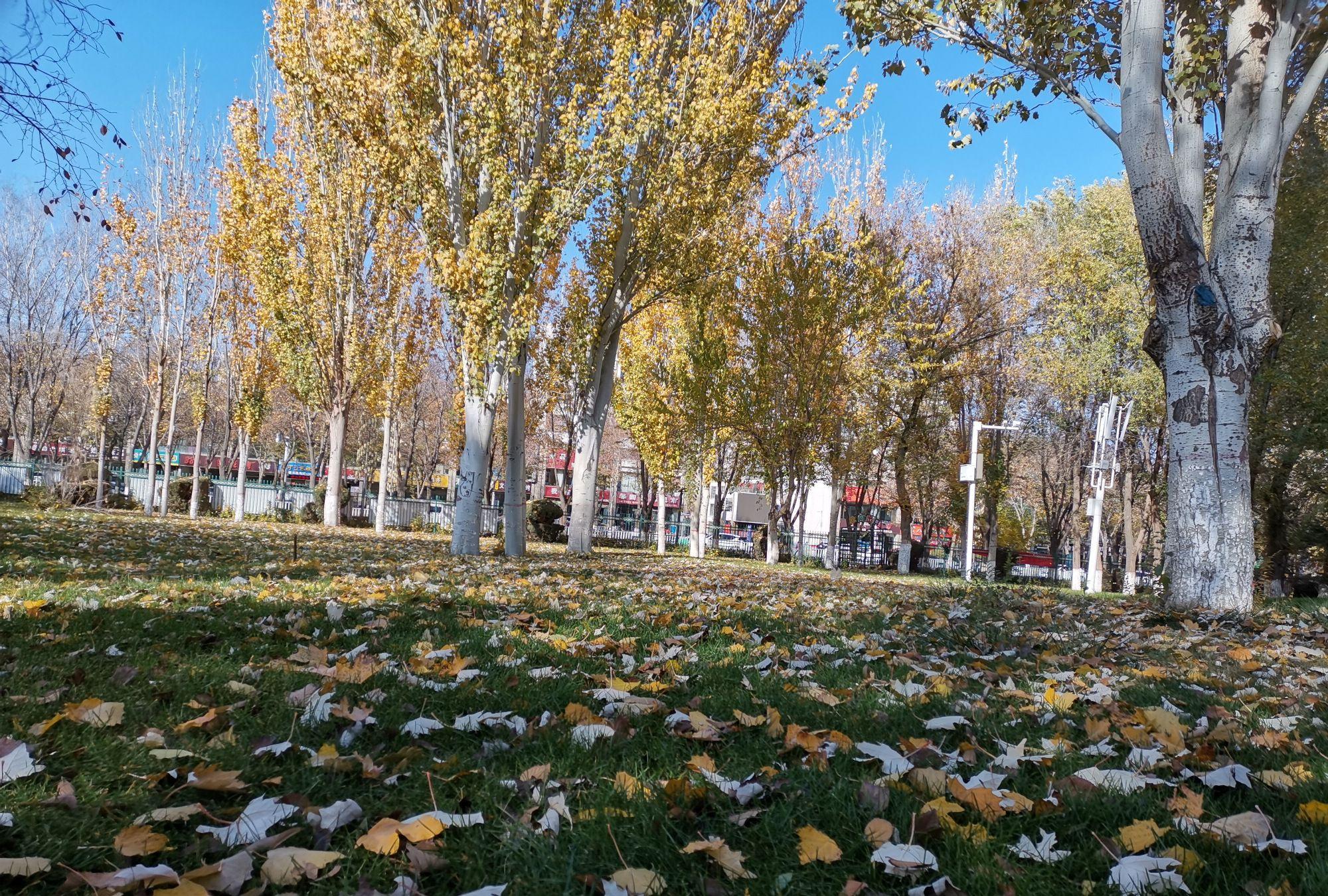 新疆的秋天,树木美如画